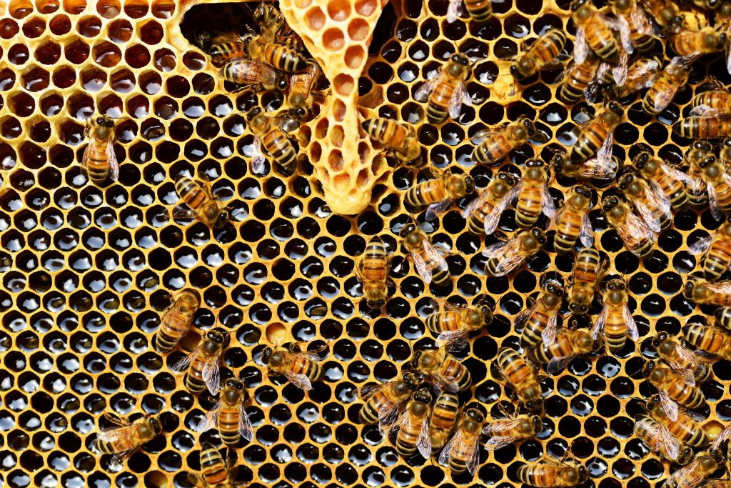 Bee hive with bees