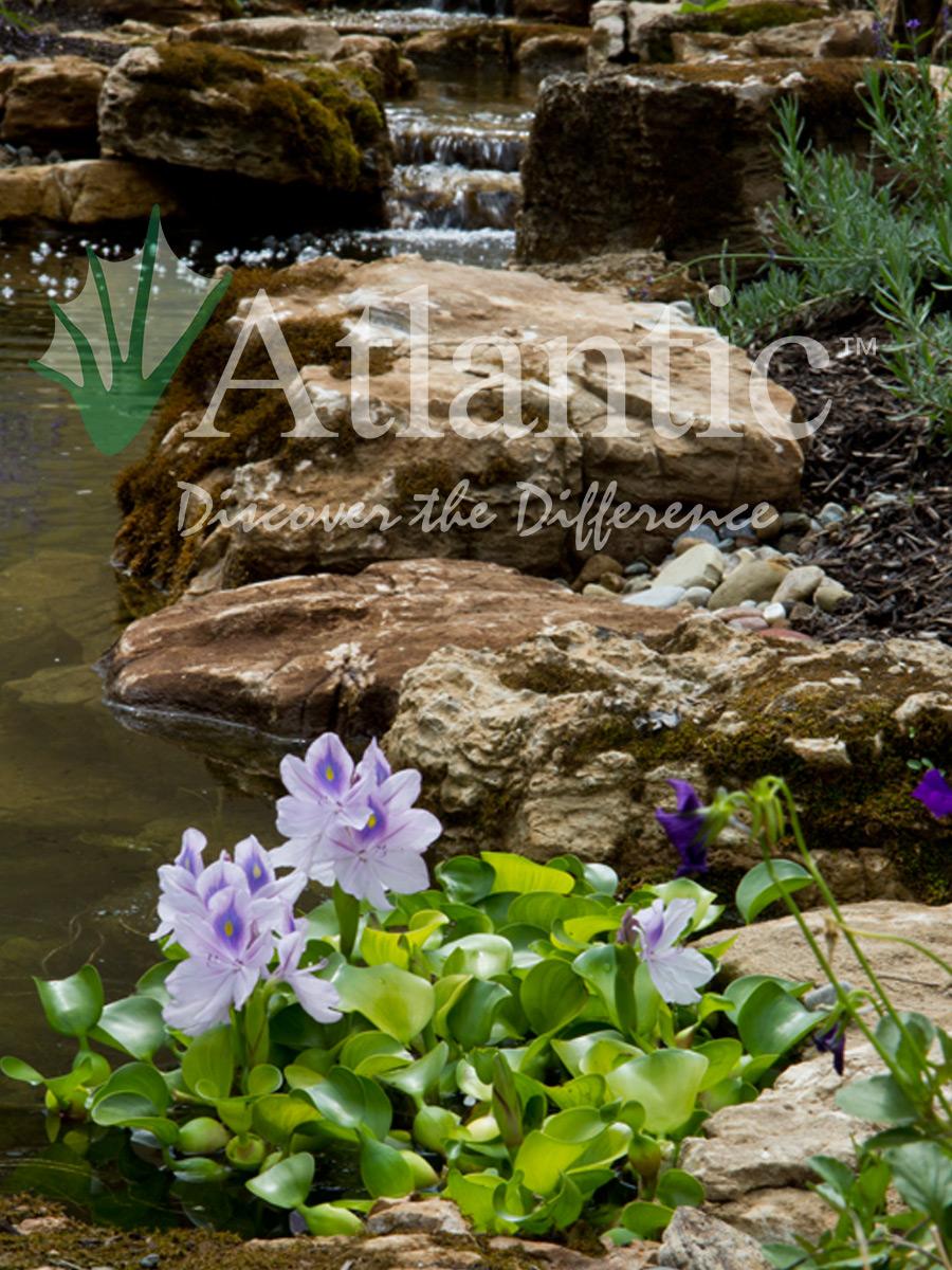 Find A Contractor >> Galleries | Pond | Atlantic Water Gardens