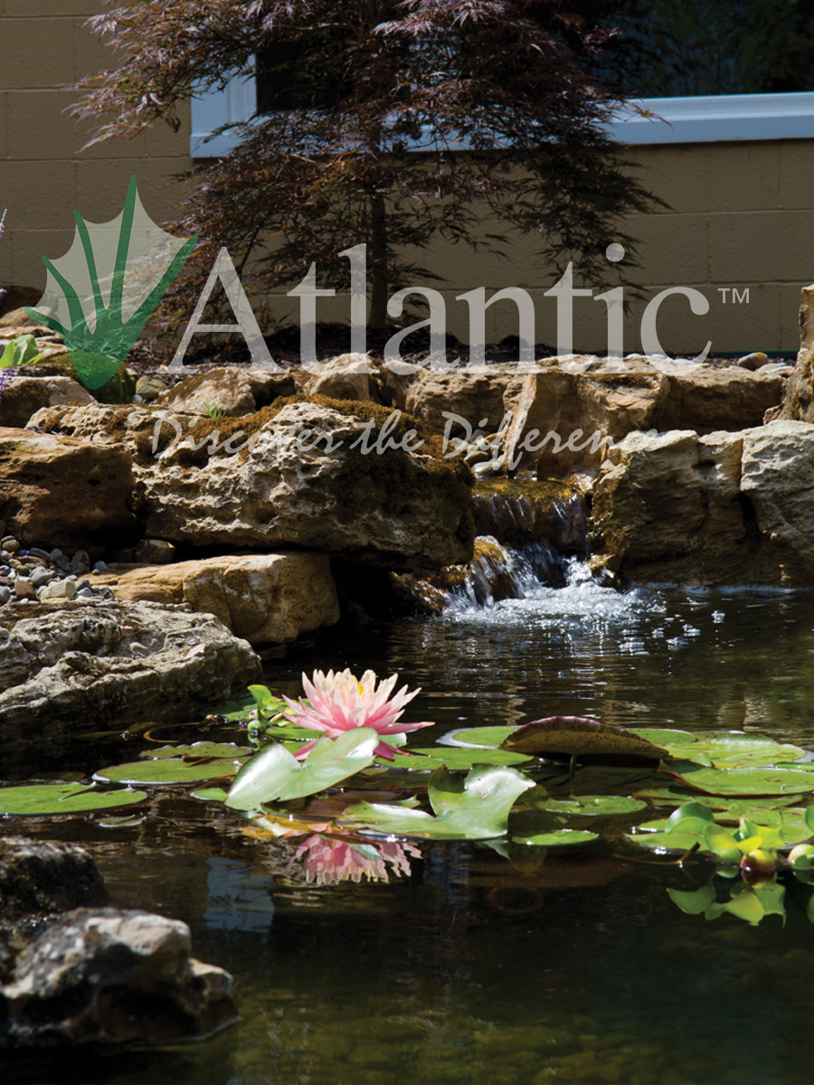Buy A Website >> Galleries | Pond | Atlantic Water Gardens